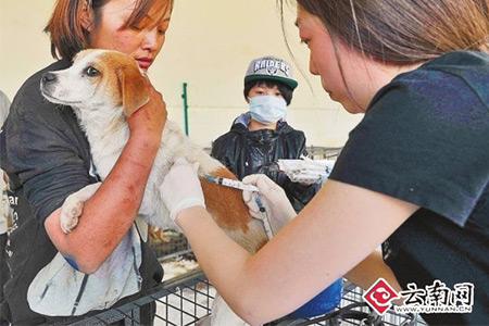 国际爱护动物基金会_爱护动物手抄报